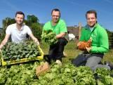 Met deze app kun je groente verbouwen via je mobieltje