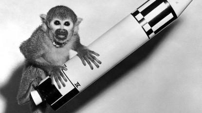 60 jaar geleden keerden eerste aapjes heelhuids terug van hun ruimtereis