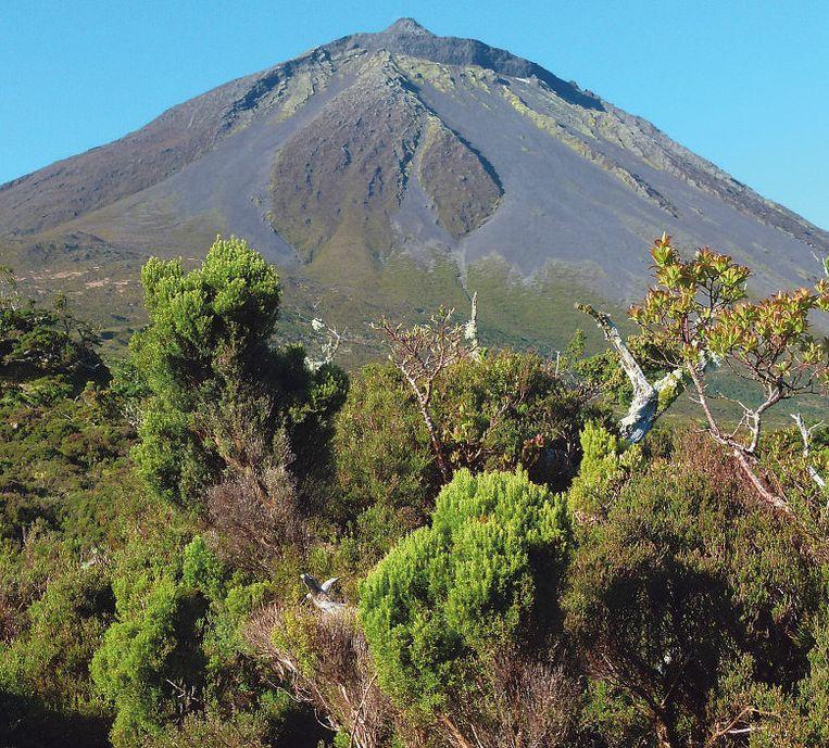 Een sportieve daguitstap: de vulkaan Pico (2.351 meter) beklimmen.