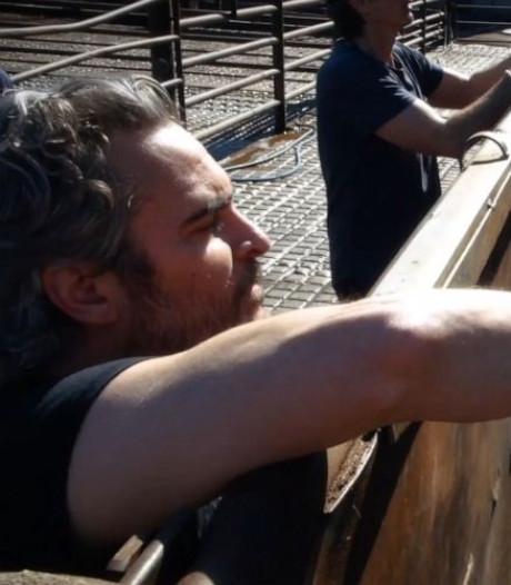 Au lendemain des Oscars, Joaquin Phoenix a sauvé une vache et son veau de l'abattoir