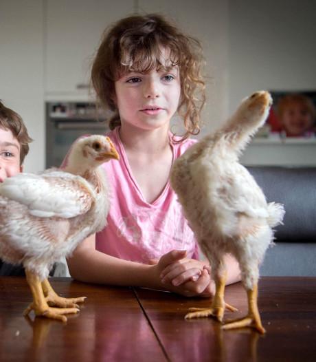 Loïs (7) en Tijmen (10) slachten straks hun eigen kip