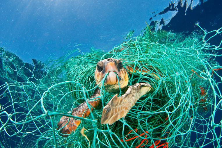 Een schildpad als slachtoffer van visserij. Beeld null