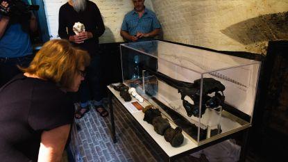 Miljoenen jaren oude dolfijnenschedel in FORT 4