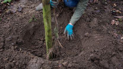 KSA Aalter plant zaterdag nieuw bos aan lokalen De Sjelter