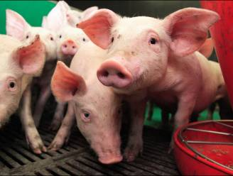 """Prijs varkensvlees moet omhoog"""