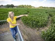 Maïsdoolhof in Fleringen voor kinderen én ouders spannend avontuur