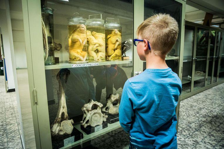 De collectie bestaat onder andere uit allerlei dieren, opgezet of op sterk water, en beenderen.