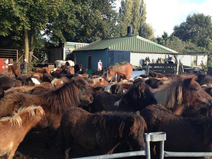 Deze paarden en pony's werden in oktober 2013 in beslag genomen bij een paardenhandelaar uit Wagenberg. Veel dieren bleken ondervoed en verkouden te zijn en ontstoken ogen te hebben. Ook de hoeven hadden lange tijd niet de nodige zorg gehad.