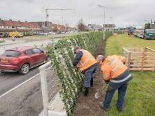 Tientallen bomen en planten maken het heringerichte stationsgebied in Goes compleet