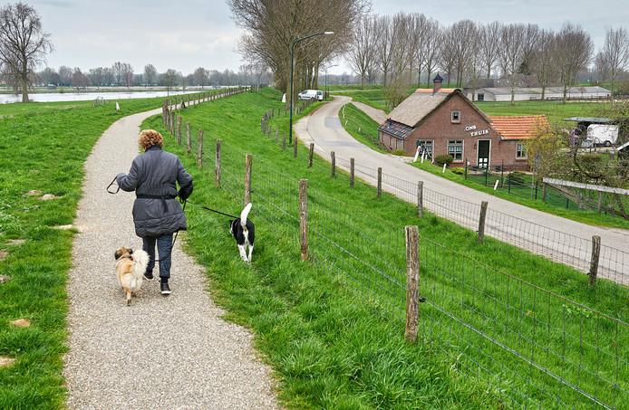 Deze tuimeldijk bij Megen toont al enkele kernpunten van Meanderende Maas. Huizen en bomen blijven staan, de dijk wordt versterkt aan de rivierkant en daar kan langzaam verkeer terecht. Auto's blijven op de lagere, oude dijk.
