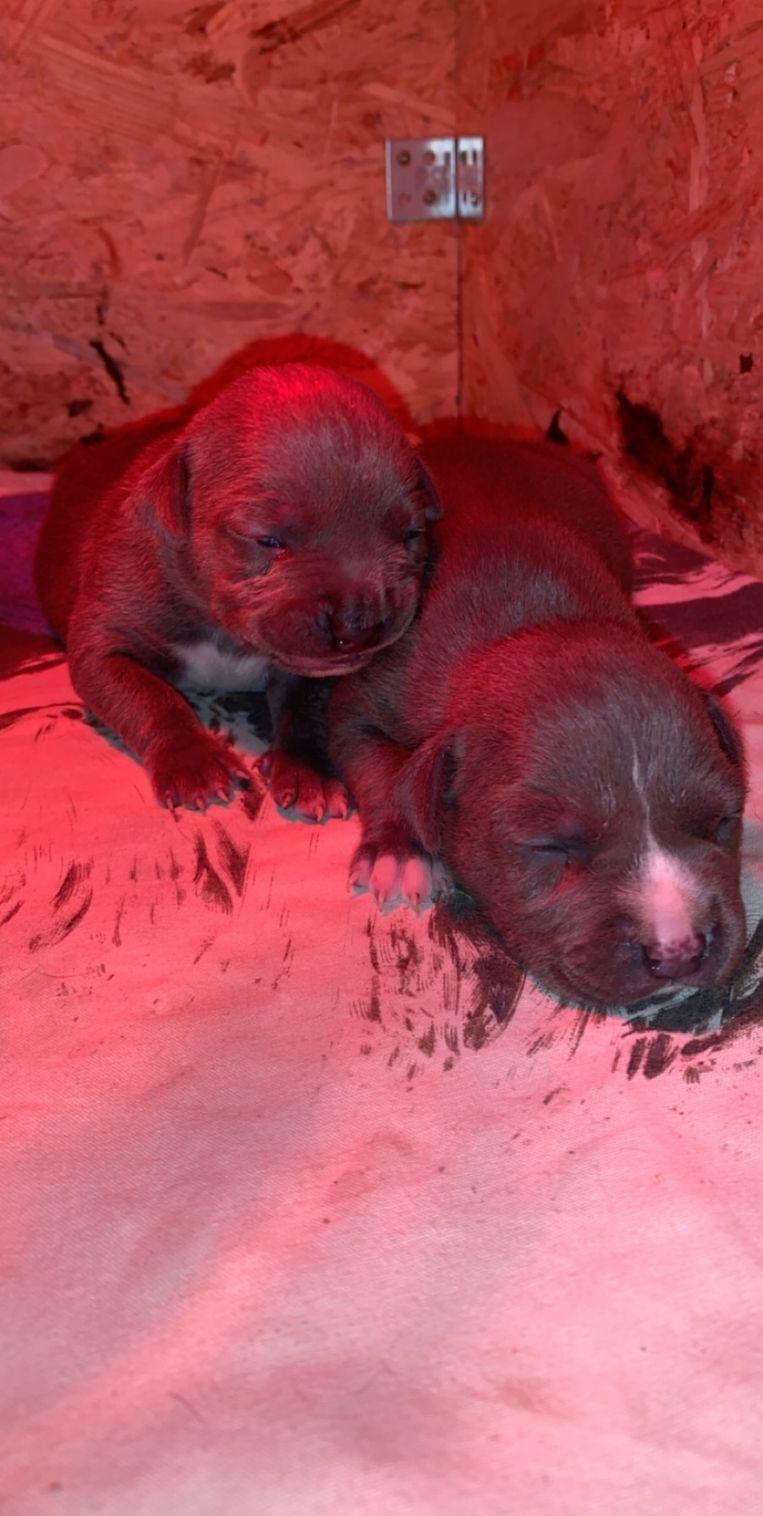 De twee gestolen pups.