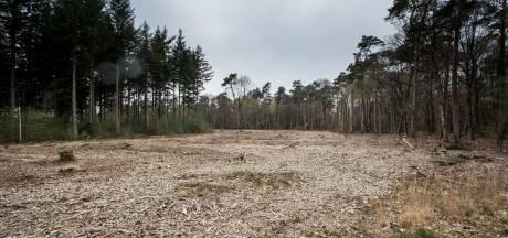 Hoogleraar: Bomenkap is niet oorzaak van het verdwijnen van bos, maar de Natuurwet