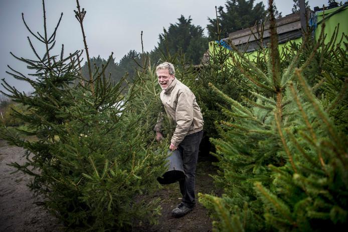 Frans Kerver zet de adoptiebomen klaar. Klanten kunnen elk jaar de kerstboom weer inleveren, zodat hij 'overzomert' en meerdere keren gebruikt kan worden.