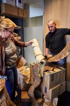 Handel bedreigde diersoorten: 'Levende kolibri's in onderbroek'
