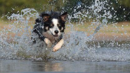 Honden krijgen eigen zwemvijver in abdijpark