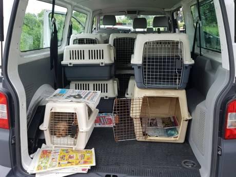 120 verwaarloosde honden in beslag genomen uit teckelfokkerijen