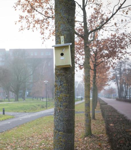 Vogelnestkastjes tegen de jeukrups? Leuk idee, maar niet in gemeentebomen