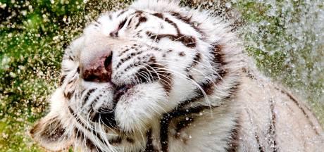 Arnhemse (61) eist schadevergoeding van Ouwehands Dierenpark na gebroken rug door 'doodsmak'