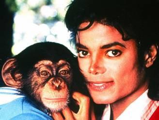 Michael Jacksons aap leeft nog, en moet nu schilderen voor de kost