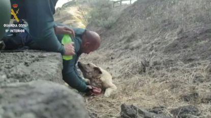 Guardia Civil redt hond uit bosbranden Gran Canaria