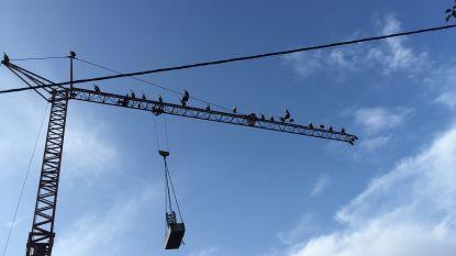 Halve dag omrijden in Ronkenburgstraat wegens plaatsing torenkraan