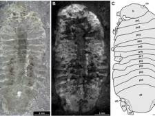 Oudste pissebed van Nederland is 245 miljoen jaar oud en heet Gelrincola winterswijkensis