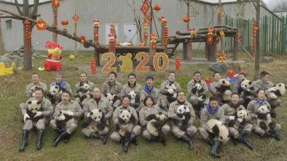 Schattig! Twintig kleine panda's voorgesteld in China