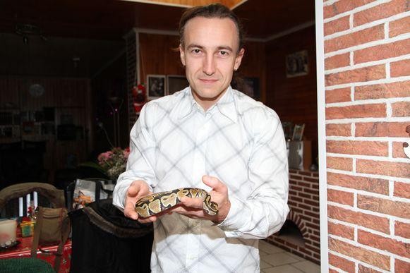 De koningspython is afkomstig uit Afrika en is niet gevaarlijk.