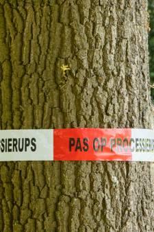 Klachten over vele nesten eikenprocessierupsen in proefgebied voor ecobestrijding aan Koedijkerweg
