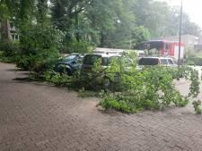 Grote tak bezorgt vier geparkeerde auto's schade in Arnhem