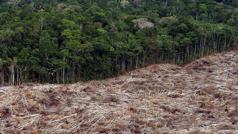 Ontbossing in het Amazoneregenwoud. Beeld epa
