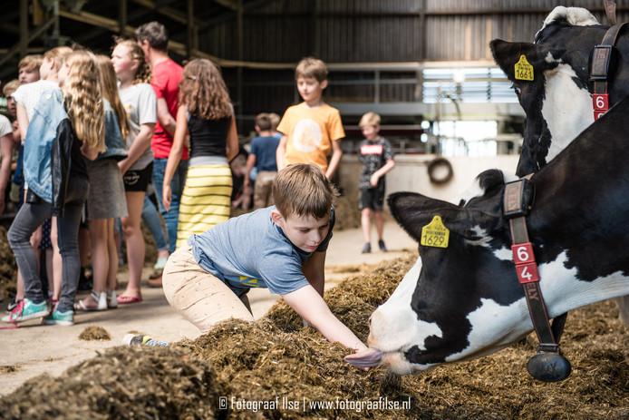Koeien en kalfjes voeren is een van de vele activiteiten tijdens De Boeren Beleving, het eerste landelijke evenement van Salland Boert en Eet Bewust.