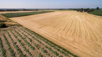 Boeren vragen dat droogte erkend wordt als landbouwramp