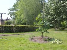 Bloemenzee om en verscherpt toezicht op geknakte Anne Frankboom Waalwijk