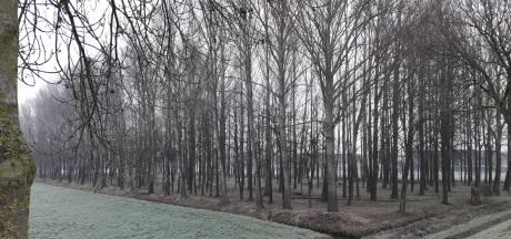 Waalwijk kapt heel wat bomen: 'Het bos wordt er beter door'