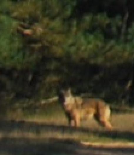 'Salland, Zuid-Drenthe én de Veluwe als epicentrum van de wolf'