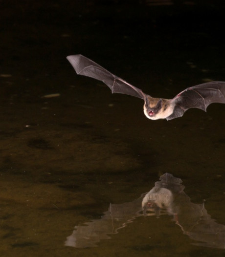 Worden vleermuizen verjaagd door nieuwe lantaarnpalen in Woudrichem?
