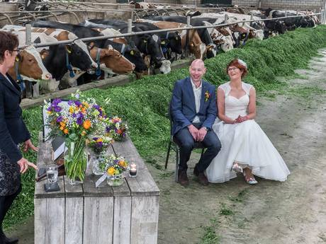 Dit echtpaar is getrouwd in hun eigen koeienstal in Heijen