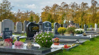 150 schapen houden Antwerpse begraafplaats Schoonselhof proper