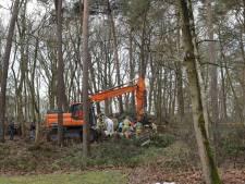 Boom valt op jongeman bij werk in bos, slachtoffer overlijdt
