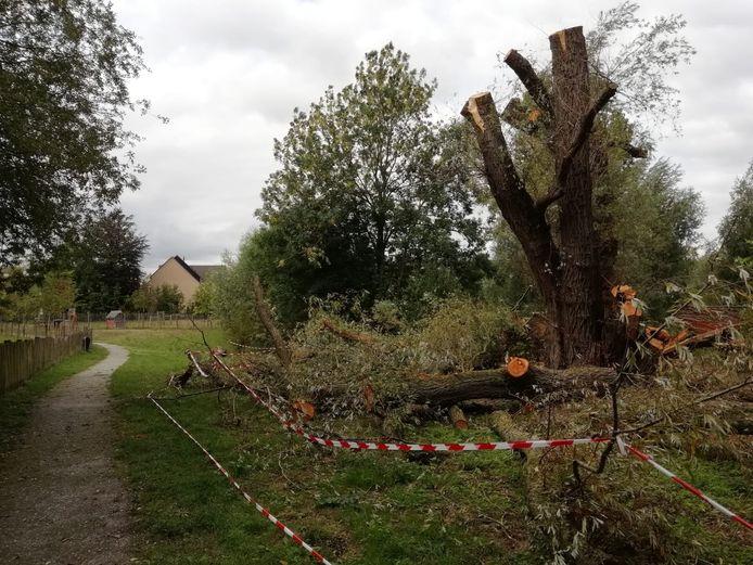 Natuurtuin Varsseveld in Leerdam is één van de 'hotspots' in de gemeente Vijfheerenlanden als het op jongerenoverlast aankomt. Twee jaar geleden werd daar de 'sprookjesboom' in brand gestoken door jongeren.