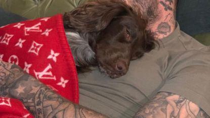 Het leven zoals het is, de Beckhams: de hond toedekken met een dekentje van 5.000 euro