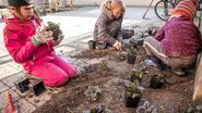 Kinderen planten zelf boompjes op de speelplaats