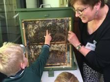 Bijen en imkers doen niet aan vakantie in Oisterwijk