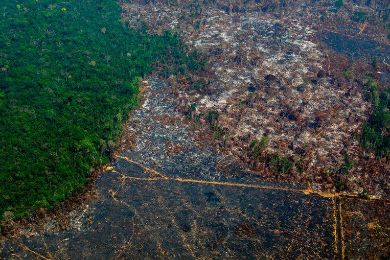 Ontbossing in het beschermde gebied Nascentes da Serra do Cachimbo in Altamira in de Braziliaanse deelstaat Pará. Beeld AFP