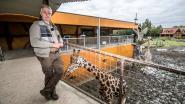 Olmense Zoo doet er alles aan om modeldierentuin te worden