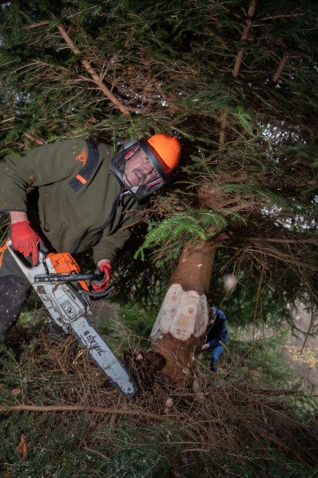 Deze kerstboom uit het Kuinderbos schittert bij Tweede Kamer: 'Mooie afleiding in crisistijd'