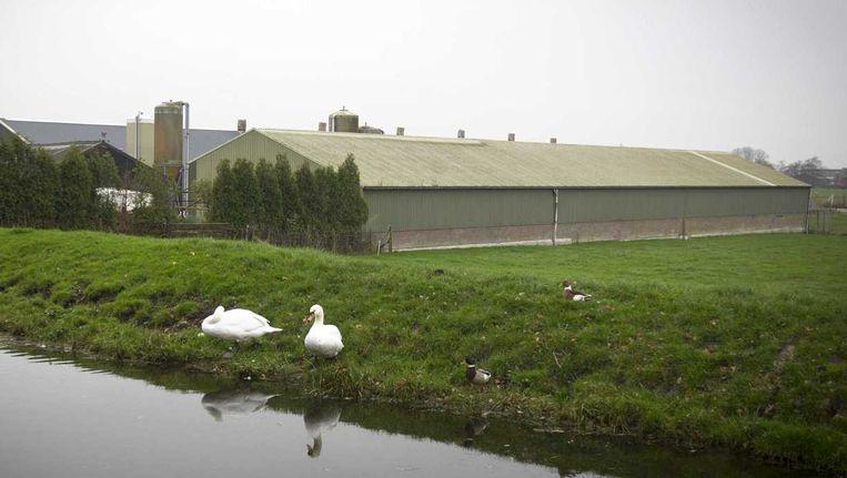 Het pluimveebedrijf in Ter Aar waar vogelgriep werd vastgesteld. Beeld anp