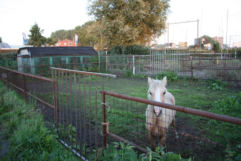 Volgens dierenorganisaties is het veel beter als een paard niet alleen staat.