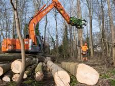 Kap honderden bomen op Walcheren begonnen